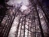 P1240605 (mina_371001) Tags: winter sky tree evening sapporo hokkaido 北海道 冬 札幌 maruyamapark foest 円山公園 木々 amazingworld photographywork olympusomdem10