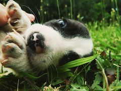 Old one (milica.milanovic99) Tags: dog baby cute love dogs animals puppy