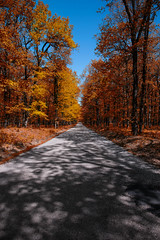 (Stavros A.) Tags: road autumn trees green fall nature grass forest landscape countryside oak woods outdoor path country stock meadow foliage greece pathway ilia peloponnese  seasonleaves      tokina1628 nikond750  stavrarg