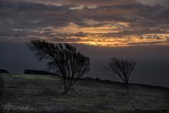 Survivors (Shastajak) Tags: trees sea dawn windswept englishchannel daybreak firehills hastingscountrypark