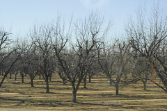 Zipping Past Pecan Trees (cobalt123) Tags: arizona canon tucson firstphotos age11 2016 anavey tucsonrockandgemshow xti canonrebelxti anaveybolender