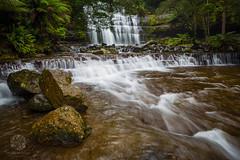 Liffey Falls (Phillip Norman Photography) Tags: waterfall australia falls liffey tasmania