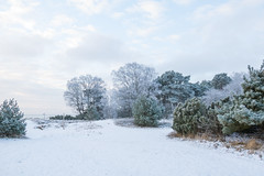 Frost (Infomastern) Tags: winter cold vinter frost rime beddingestrand rimfrost kallt