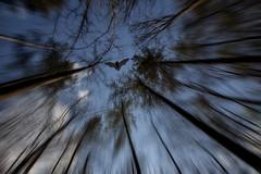 Swirling Bat (Klaus Ficker) Tags: canon bat eos5dmarkii kentuckyphotography klausficker