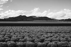 Campos de Yecla-Murcia (antonioruizgay) Tags: blancoynegro murcia nubes campo 35 montaas tierra huerta yecla d7100