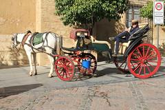 Cordoba (Valiena) Tags: trip holiday verde beauty real spain espana alcazar mezquita viaggio cordova vacanza spagna giardini turisti calesse ordoba cocchio ccavallo