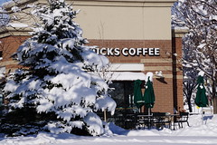Coffee would be warming (Let Ideas Compete) Tags: snow tree march colorado sunny boulder starbucks boundercounty