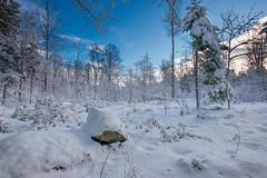 La neve e il suo magnifico silenzio (marypink) Tags: trees sky snow germany bavaria germania baviera nikond800 bayerischerwaldnationalpark nikkor1635mmf40