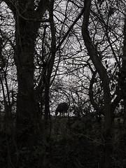 black-horse_7316-030416 (Peadingle) Tags: trees horse silhouette