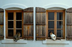 look at me when I'm talking to you (s_evil) Tags: windows cats animals cat turkey outdoors bozcaada