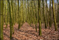 Groen... (Astrid1949) Tags: april spier 2016 staatsbosbeheer dwingelderveld