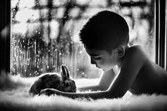 Rosenberg-Ana_-1-385 (Ana~Rosenberg) Tags: rabbit bunny luna fujifilm 58mm helios 444 bunnyrabbit familypet xt1 fujifilmxseries fujifilmxt1 fujixt1