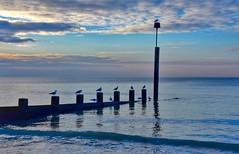 Birds (Nige H (Thanks for 4.6m views)) Tags: sea sky cloud seascape nature birds sunrise landscape dawn coast groyne bournemouth