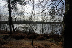 25.3.16 Delamere Forest 44 (donald judge) Tags: trees water forest countryside cheshire mere delamere