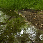 Rain Drain Ecosystem Revisit