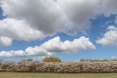 Spring (Hans Makkee) Tags: clouds spring blossom cumulus soesteberg