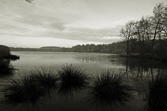 At the waterside (M a u r i c e) Tags: trees blackandwhite bw nature water netherlands monochrome limburg efs1022mm