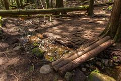 Trail pic (Bob_2006) Tags: hike westvancouver wanderung cypressfalls