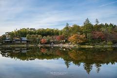 . (bgfotologue) Tags: park autumn japan landscape carpet photography tokyo photo maple image foliage momiji    imaging   gingko  redleaves  rikugien  2015    bgphoto    500px   tumblr fbpage bellphoto