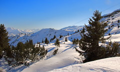 Weisse Arena (alice_winkler) Tags: schnee trees winter sun snow schweiz switzerland sonne laax flims graubnden grison whitearena weissearena