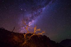 The tree and the universe (Luis Prez Corts) Tags: sky night stars arbol noche astrophotography cielo astrofotografia estrellas nocturna universe cosmos universo tokina1116mm sonya58
