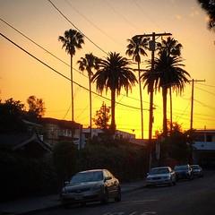 Sunset off of Sunset Blvd.