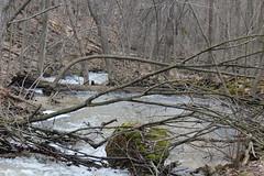 IMG_0393 ( Szczep Wodny Batyk ) Tags: zima wiosna brucetrail snieg wedrowka szczepwodnybaltyk szczepbaltyk silvercreekconservationarea wedrownicy druzyna16ta starsiharcerze