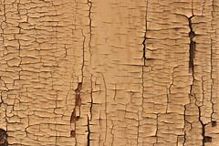 Paint Tectonics (gripspix (OFF)) Tags: door detail texture germany deutschland tor peelingpaint tbingen badenwrttemberg textur abbltterndefarbe 20160407
