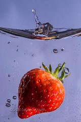 11/30 Splash (belincs) Tags: uk water strawberry flash indoor lincolnshire april splash 2016 aprilproject