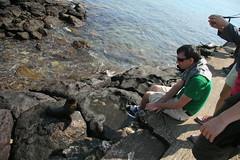 IMG_7653 (chupalo) Tags: sealions lavarocks islasplaza