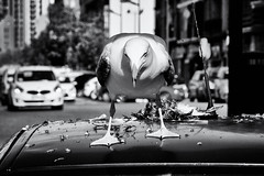 The killer (lucas2068) Tags: city car dove seagull ciudad paloma eat coche gaviota scavenger carroero