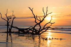 New beginnings (Theresa Rasmussen) Tags: ocean tree sunrise botanybay edisto edistoisland boneyardbeach