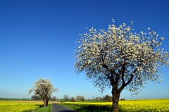 Spring is fantastic (Tobi_2008) Tags: road sky tree nature field germany landscape deutschland spring saxony natur feld himmel ciel sachsen rue landschaft allemagne baum germania frhling strase platinumheartaward