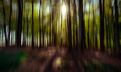 Magical Forrest (Frank Busch) Tags: trees sunset sunlight germany woods enchanted icm frankbusch wwwfrankbuschname photobyfrankbusch frankbuschphotography imagebyfrankbusch wwwfrankbuschphoto