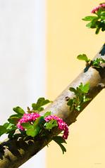 Un_qualcosa_in_piu (Danilo Mazzanti) Tags: photography colore foto photos fotografia fiori ramo fotografo danilo composizione mazzanti danilomazzanti wwwdanilomazzantiit