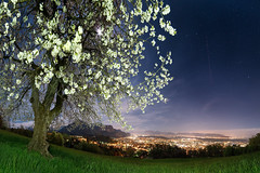 Beneath cherry blossoms in full moon (OMD1961) Tags: longexposure moon cherry stars austria dornbirn sterreich tripod moonlight cherryblossoms cherrytree vorarlberg samyang14mm sonya7rii