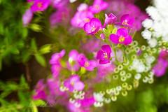 (kinga.lubawa) Tags: colors spring kwiaty wiosna kwiat kolory kolorowe