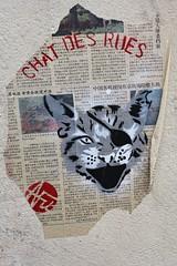Nice Art_1667 rue Alphand Paris 13 (meuh1246) Tags: streetart paris chat pirate animaux butteauxcailles paris13 niceart ruealphand