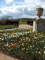 View West from the Rose Garden, Ragley Hall, Warwickshire, 30 April 2016 (AndrewDixon2812) Tags: rose garden hall daffodil tulip arrow warwickshire hertford stratford ragley alcester