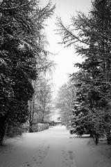 Winter Morning (D-Noc) Tags: winter snow monochrome denmark blackwhite vinter pancake danmark aalborg sne jylland nordjylland skalborg eos60d canonefs24mmstm