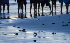 Cuando el mar llama (josejuanzavala) Tags: blue sea naturaleza beach azul fauna mexico mar playa tortugas ltytr1 josejuanzavala