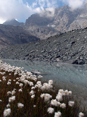 Crot del Ciaussiné (Lumase) Tags: flowers mountain alps trekking walking outdoors hiking september alpine wilderness peaks piedmont wildness valdala littletibet crotdelciaussiné