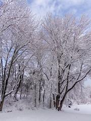 DSC01607-2 (johnjmurphyiii) Tags: winter usa snow connecticut shelly cromwell originaljpeg johnjmurphyiii 06416 sonycybershotdsch90