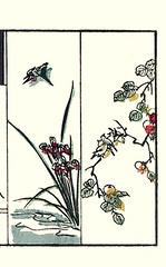 Left  iris and common kingfisher; Right  Japanese persimmon and Japanese white-eye (Japanese Flower and Bird Art) Tags: iris flower bird art japan japanese book picture kingfisher persimmon common kiyoshi woodblock kaki whiteeye takizawa japonicus iridaceae ukiyo diospyros alcedo atthis alcedinidae zosterops zosteropidae ebenaceae readercollection