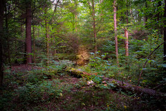 Deep-In-The-Woods (desouto) Tags: trees green nature landscape woods path hdr