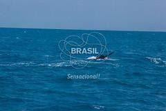 NE_Abrolhos0075 (Visit Brasil) Tags: horizontal brasil fauna natureza bahia nordeste detalhe externa abrolhos semgente diurna