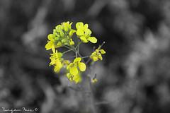 Nature <3 (Furqan Faiz) Tags: new flower nature beautiful lens amazing nikon flickr explore nikkor nikkor1855mm nikonphotography instagramapp nikond5300 nikontop