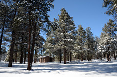 Dogtown Picnic Area in the Snow (Kaibab National Forest) Tags: trees winter arizona usa snow forest landscape williams campground kaibabnationalforest williamsrangerdistrict dogtownlake
