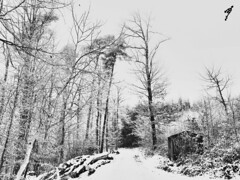 """A Small Cabin In The Cold Woods"" (Anschuetz Photography) Tags: winter blackandwhite bw snow cold germany cabin wintertime bnw coldwinter cabininthewoods aichwald"