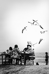 Assateague:  Birds--Leave Me Alone (Jon Meyer Photographic Art) Tags: bird beach monochrome birds table virginia picnic surf unitedstates gulls satchel seashore assateague easternstates picnickers jonmeyer jonmeyerphotography jonmeyerphotographicart hasselbladh5d50c